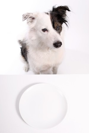 dog and empty plate  Stock Photo - 4470669
