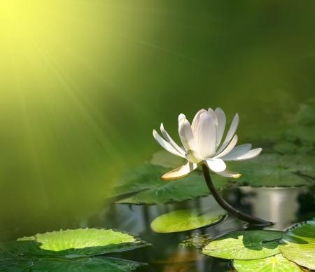 緑の背景に水のユリ