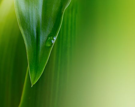 green leaf background with water drop Stock Photo - 6260471