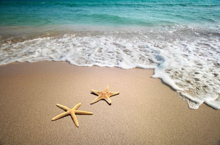 two starfish on a beach  photo