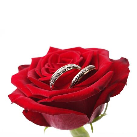 gold rings on a red rose  photo