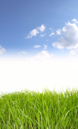 green grass Stock Photo - 6674347