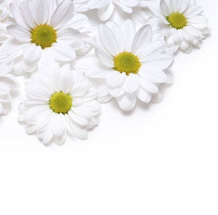 daisy field: chamomiles background Stock Photo