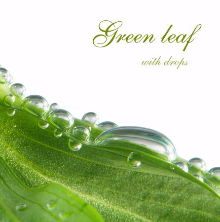 dew drop: green leaf background with water drop