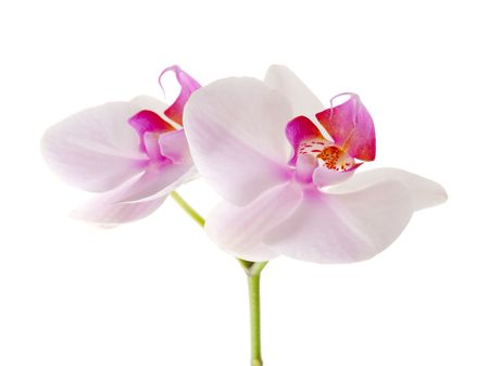 orchid flower Stock Photo - 8169676