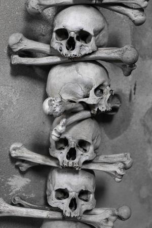 skull and bones photo