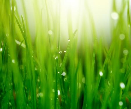 �cologie: l'herbe avec des gouttes d'eau Banque d'images