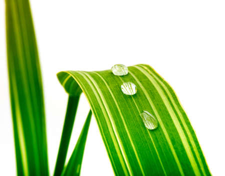 green leaf with water drops Stock Photo - 8699713