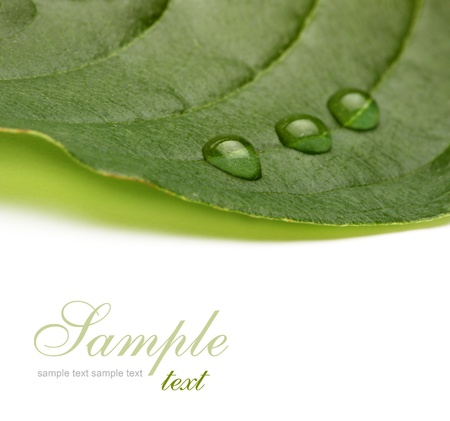 green leaf with water drops Stock Photo - 8699719
