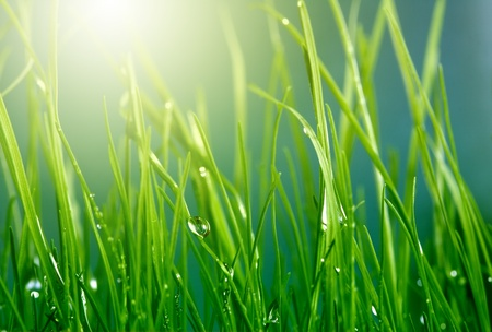 soft background with grass photo