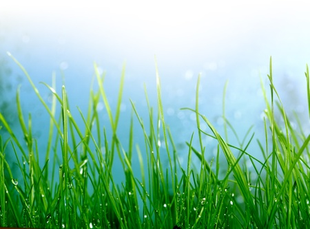 soft background with grass Stock Photo