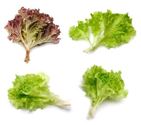 lechuga: lechuga de hojas fresca sobre blanco