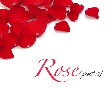 rose petals photo
