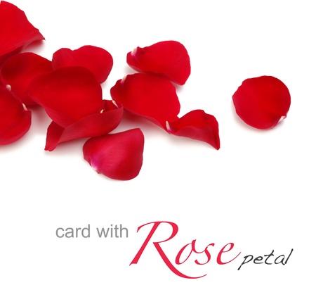 rose petals Stock Photo - 9009316