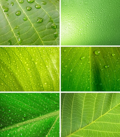set of green leaf with water drops photo