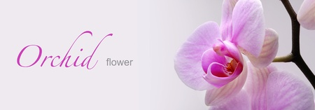 orchid flower: web banner with orchid flower