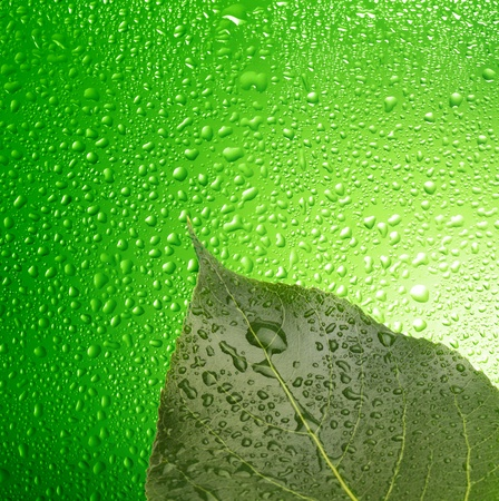 green leaf with water drops photo