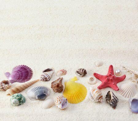 sea shells on sand background  photo
