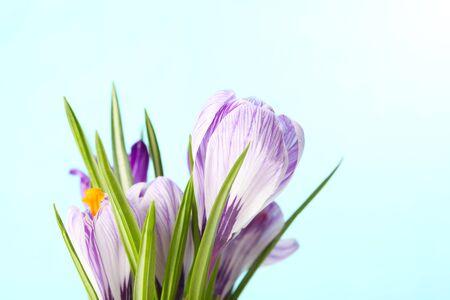 spring flower photo