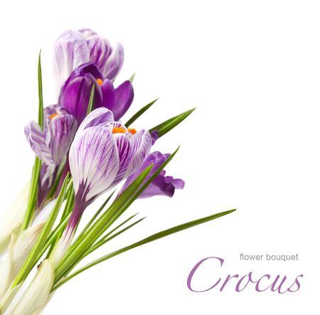 spring bouquet Stock Photo - 9072206