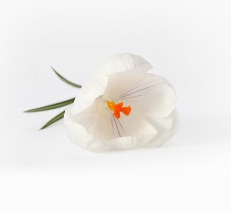 white flower  photo