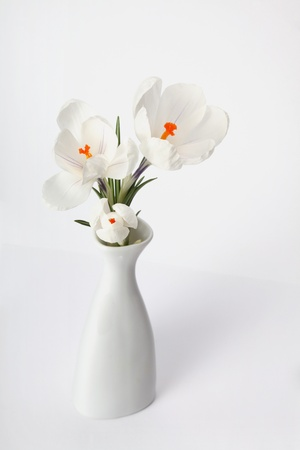 white flower in white vase photo