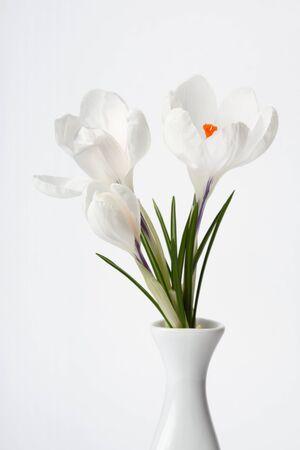 white flowers on white photo