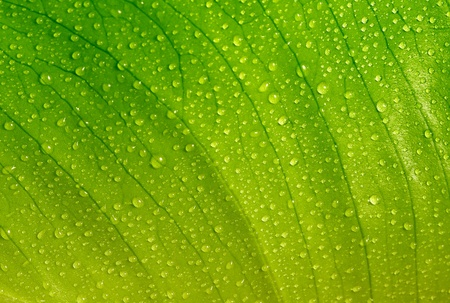 feuille verte avec des gouttes d'eau