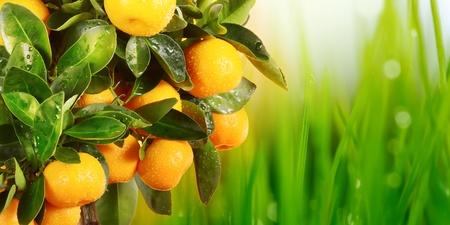 orange branch Stock Photo - 9233352