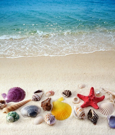 sea shell on a beach Stock Photo - 9239753