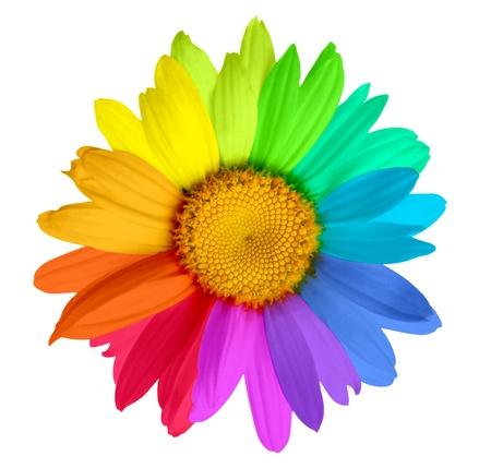 multicolored flower photo
