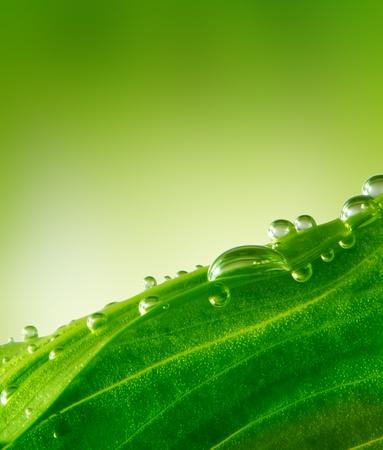 water droplets: green leaf background