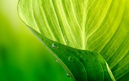 arrière-plan de feuilles vertes