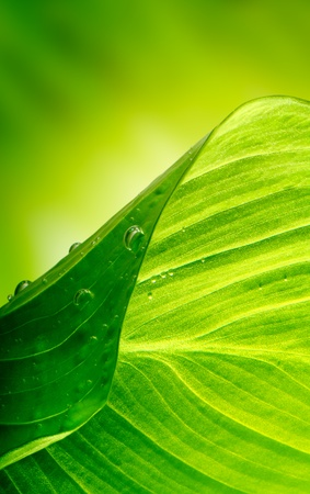 green leaf background Stock Photo - 9442774