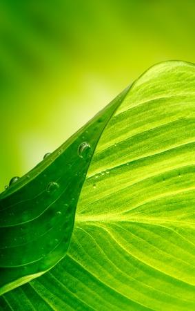 groene blad achtergrond