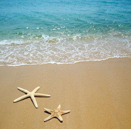 starfish on a beach sand Stock Photo - 9442782