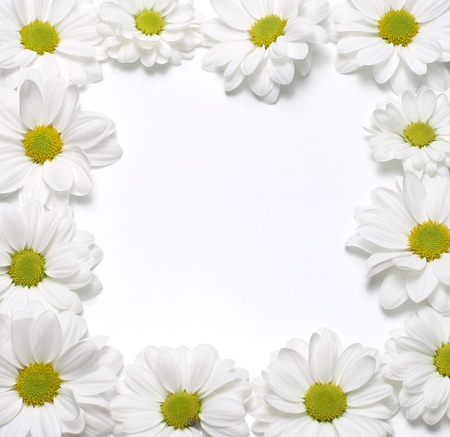 chamomile frame photo