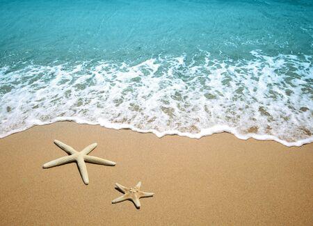 estrella de mar en una arena de playa  Foto de archivo