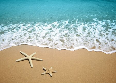 beach scene: starfish on a beach sand