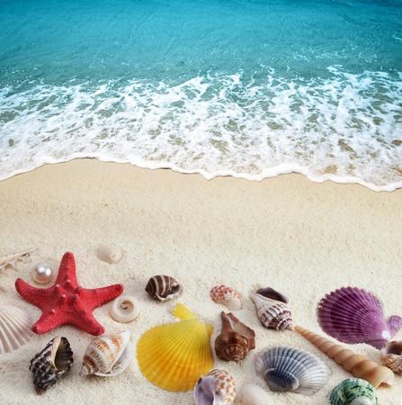 romantico: conchas de mar en la playa de arena