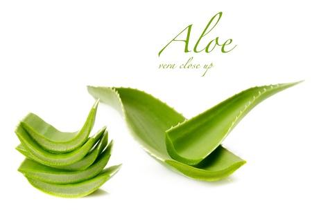 aloe vera: aloe vera fresh leaf