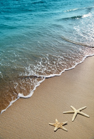 beach: starfish on a beach sand