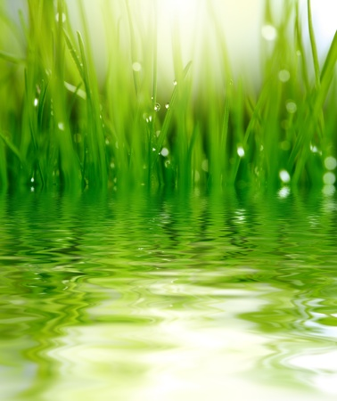 dewdrops: grass and water background Stock Photo