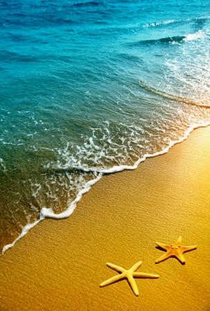 estrella de mar: estrellas de mar en una playa de arena