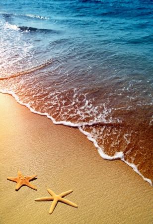 estrellas de mar en una playa de arena
