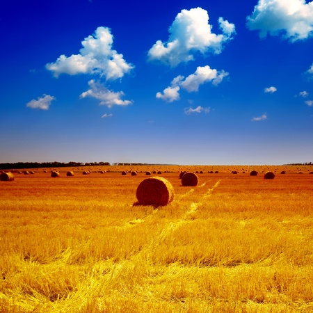rick: haystack on the meadow in summer
