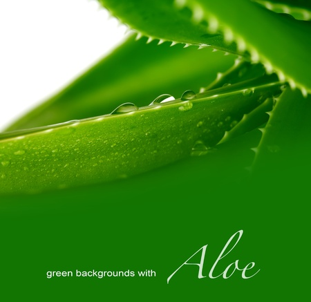 loe: background with aloe