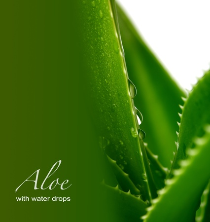 aloe background photo