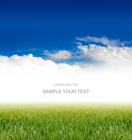 green vegetation: green grass under blue sky Stock Photo