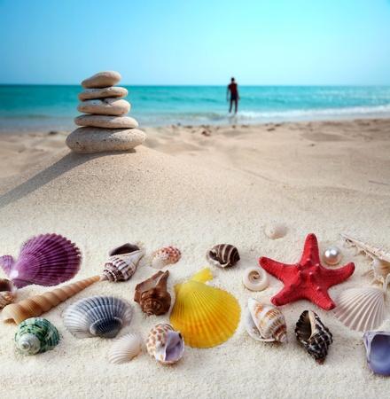 sea shells on sand beach photo